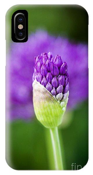Botany iPhone Case - Allium Hollandicum Purple Sensation by Tim Gainey