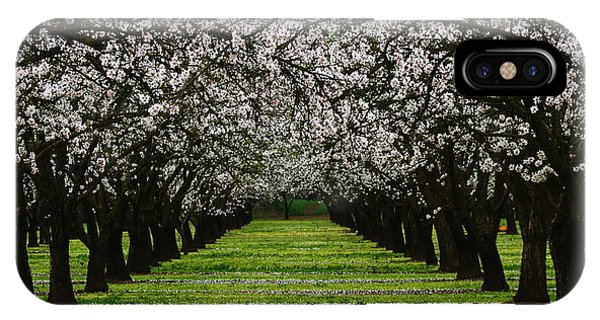 Almond Orchard IPhone Case