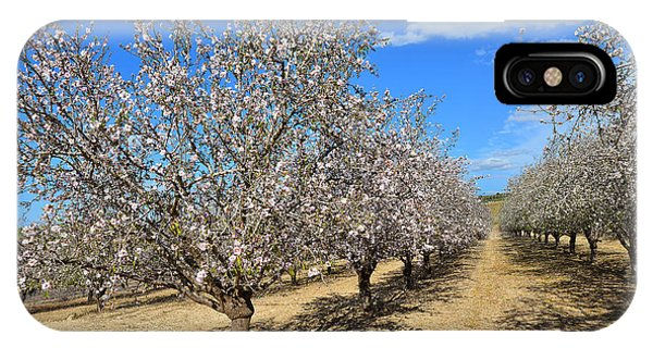 Almond Trees IPhone Case