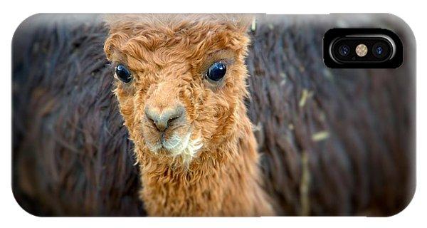 Alpaca Cria  IPhone Case