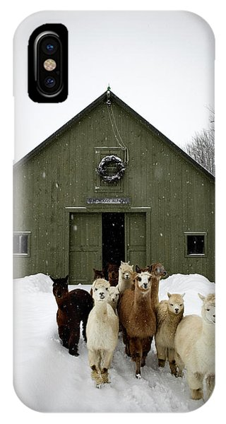 New England Barn iPhone Case - Alpaca Herd At Farm In Snowfall, Maine by Peter Dennen
