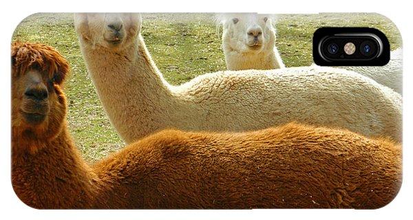 Alpaca Trio IPhone Case