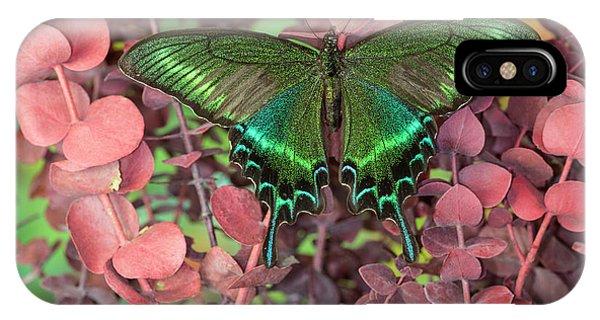 Alpine Black Swallowtail Butterfly Phone Case by Darrell Gulin
