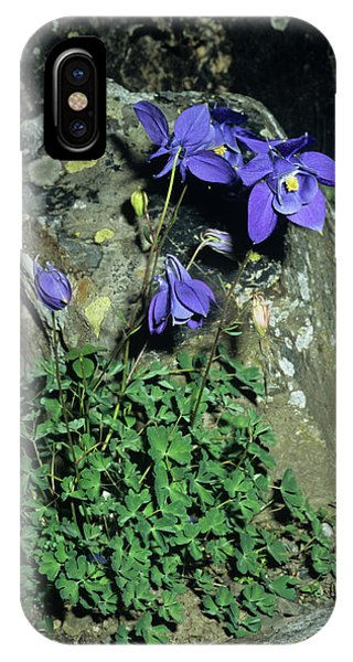 Aquilegia iPhone Case - Alpine Columbine Flowers by Brian Gadsby/science Photo Library