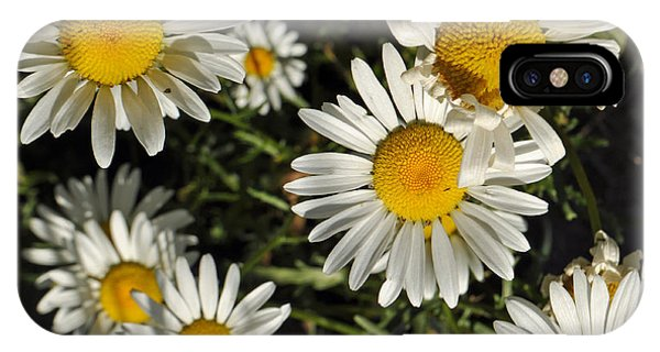 Alpine Daisies In Glacier National Park IPhone Case
