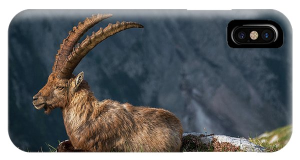 Alpine Ibex Phone Case by Ales Krivec