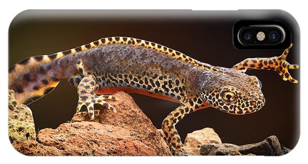 Newts iPhone Case - Alpine Newt by Dirk Ercken