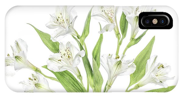Lily iPhone Case - Alstroemeria by Mandy Disher