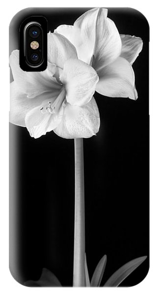 Pistil iPhone Case - Amaryllis In Black And White by Adam Romanowicz
