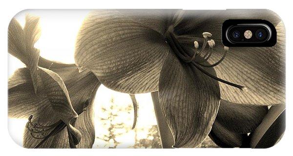 Amaryllis In Bloom IPhone Case