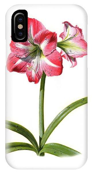 Amaryllis iPhone Case - Amaryllis by Richard Harpum