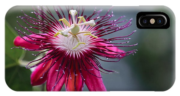 Amazing Passion Flower IPhone Case