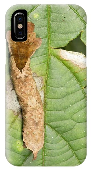 Caterpillar iPhone Case - Amazonian Caterpillar On A Leaf by Dr Morley Read