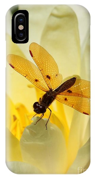 Amber Dragonfly Dancer IPhone Case