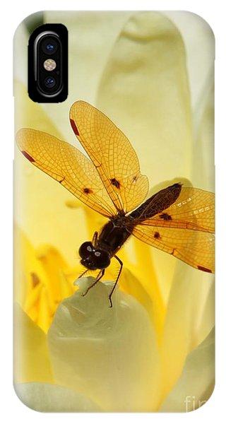 Amber Dragonfly Dancer IPhone Case