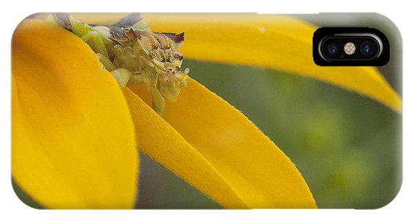 Ambush Bug On A Petal IPhone Case