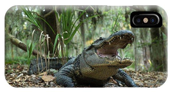 American Alligator (alligator IPhone Case