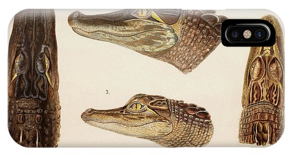 American Alligator Phone Case by Natural History Museum, London/science Photo Library