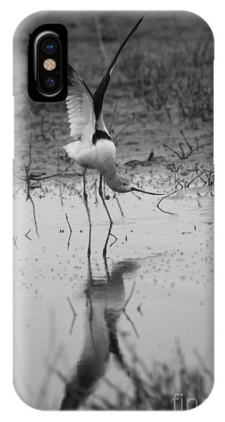 American Avocet Reflection IPhone Case