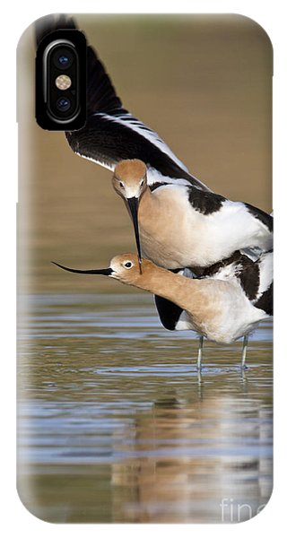 American Avocets IPhone Case