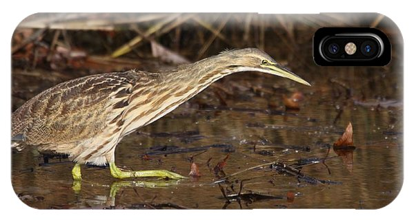 American Bittern IPhone Case