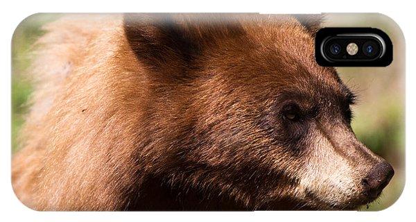 American Black Bear IPhone Case