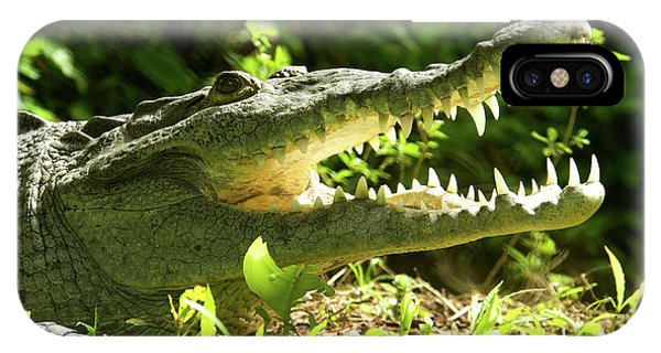 Crocodile iPhone Case - American Crocodile (crocodylus Acutus by Andres Morya Hinojosa