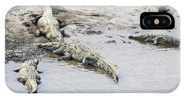 American Crocodiles (crocodylus Acutus) IPhone Case