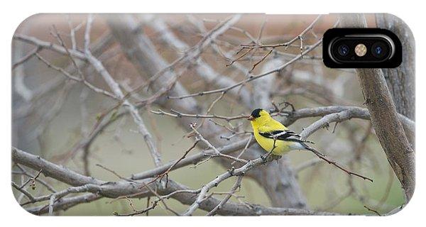 American Goldfinch 1 IPhone Case
