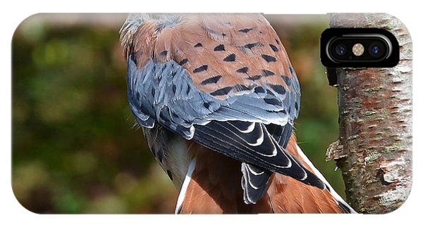 American Kestral Portrait IPhone Case