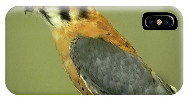 iPhone Case - American Kestrel by Adrienne Petterson