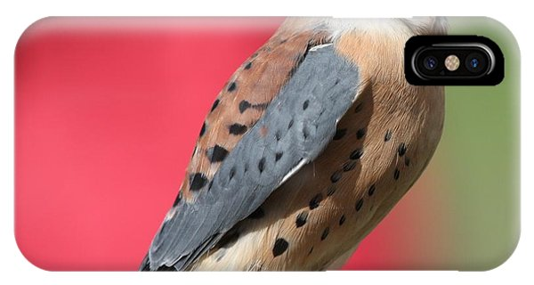 IPhone Case featuring the photograph American Kestrel by Nathan Rupert