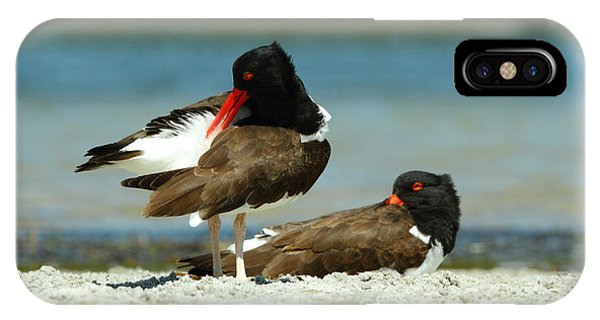 American Oystercatcher Grooming IPhone Case
