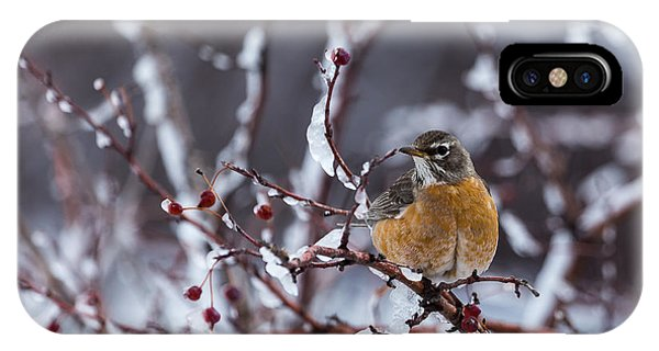 American Robin IPhone Case