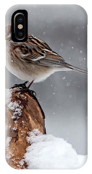 American Tree Sparrow In Snow IPhone Case
