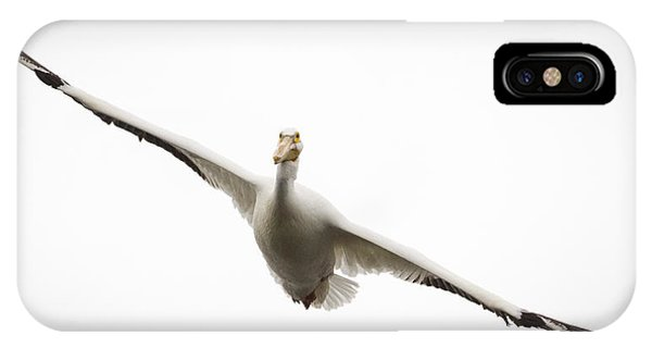 American White Pelican Phone Case by Ricky L Jones