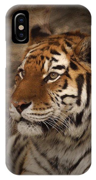 Amur Tiger 2 IPhone Case