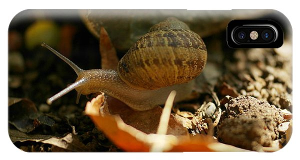 Little Things iPhone Case - An Awesomely Slow Snail by Jeff Swan