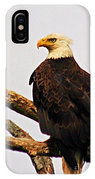 An Eagle's Perch IPhone Case