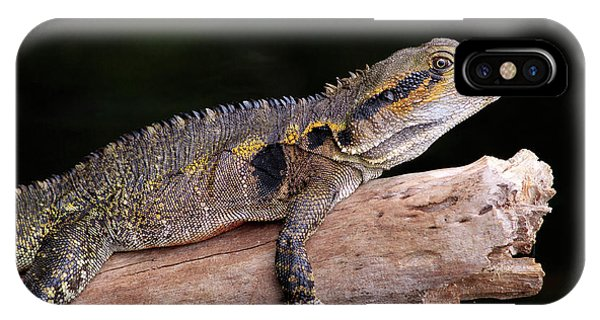 Far North Queensland iPhone Case - An Eastern Water Dragon (eastern Water by Paul Dymond