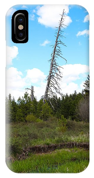 An Old Dead Tree IPhone Case
