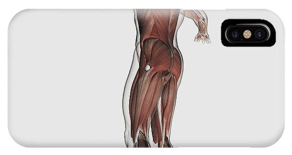 Gracilis Muscle iPhone Cases | Fine Art America