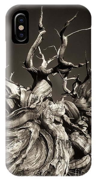 Ancient Bristlecone Pine In Black And White IPhone Case