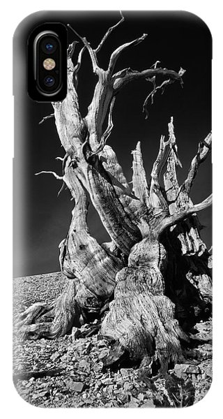 Alive iPhone Case - Ancient Bristlecone Pine Tree Clings by Jerry Ginsberg