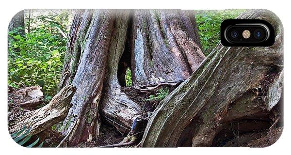 Ancient Rainforest Cedar Trees IPhone Case