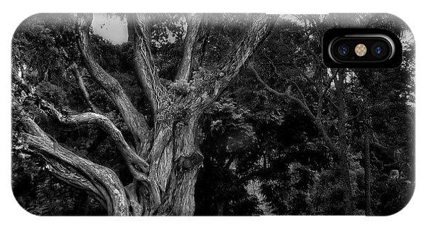 Ancient Tree IPhone Case