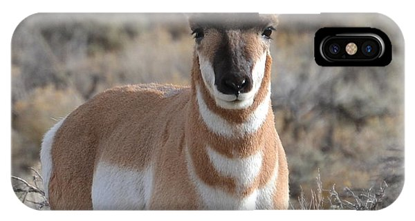 ...and The Antelope Play IPhone Case