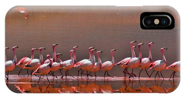 Andean Flamingoes IPhone Case