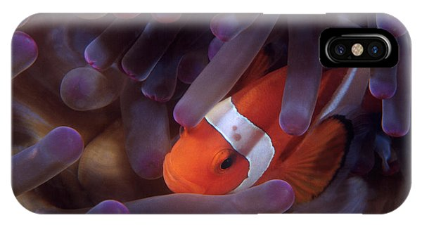 Anemonefish IPhone Case