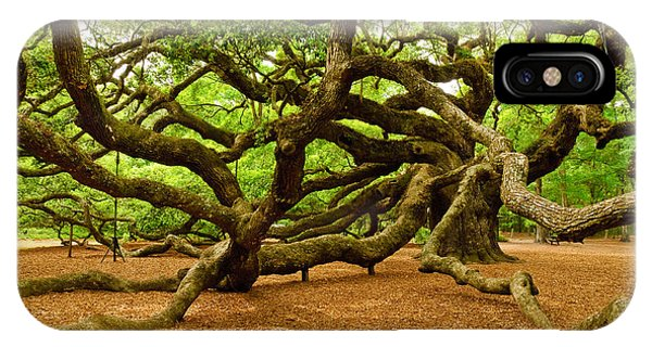 Angel Oak Tree Branches IPhone Case